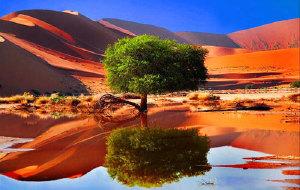 【纳米比亚图片】狂野荒蛮之地—纳米比亚