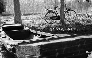 【济宁图片】情不知所起 一往而深——【微山湖漫记】