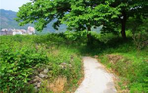 【从化图片】广东从化-徒步竹林