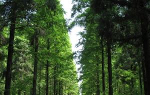 【崇明岛图片】上海崇明-东平国家森林公园+西沙湿地公园一日游