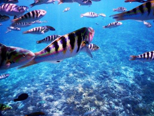 壁纸 海底 海底世界 海洋馆 水族馆 桌面 510_383