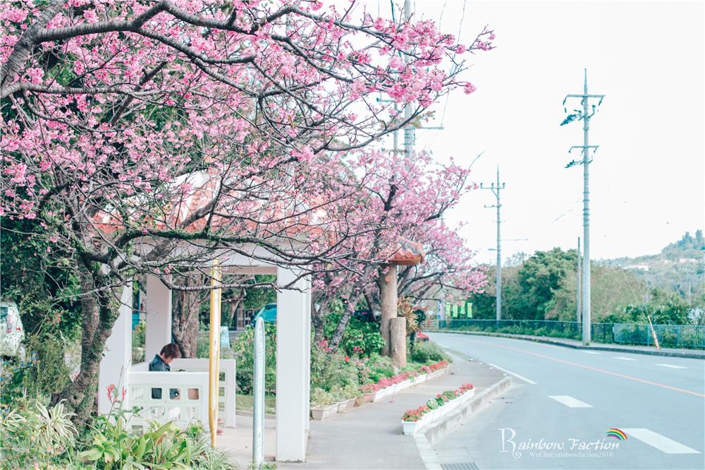 日本樱花水彩画