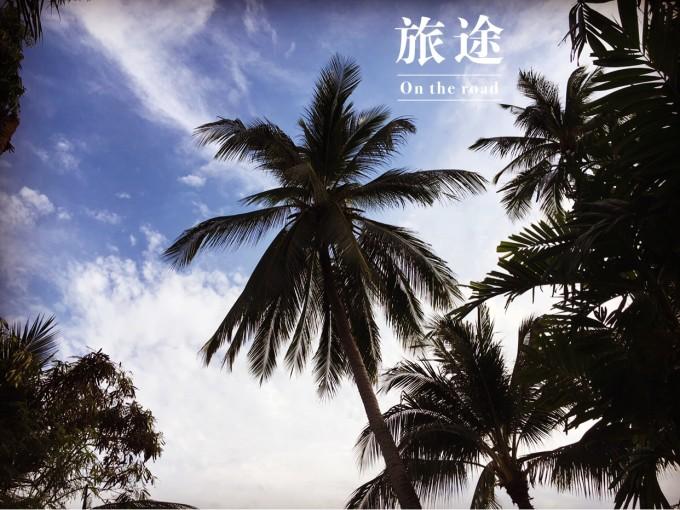 椰子树当然是蓝天大海的最佳伴侣,还记得以前电脑开机画面就是如此.