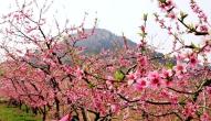 五一去平谷赏桃花