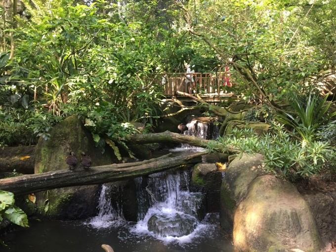 游玩海洋馆出发去新加坡日间动物园咯