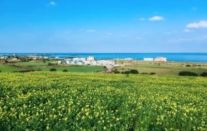 【韩国图片】一边是碧海,一边是雪山----在济州岛的秋与冬