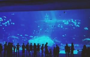 【珠海横琴长隆国际海洋度假区图片】深海里的奇妙约会