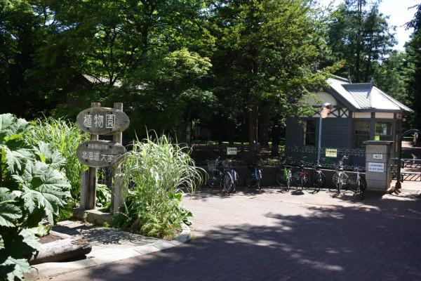 因为中村屋就在北海道大学旁,吃过午饭我们就散步到北海道大学的植物园来参观。这里是这次北海道之旅所有收费景点中参观时间最短的一个。也许是我们来的季节不对。如果一定要去参观的,请一定涂抹好防蚊液。但据说北海道大学还是蛮美的,特别是有条浪漫的林荫道。