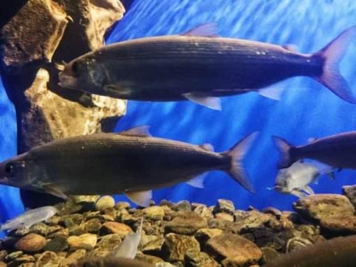 壁纸 动物 海底 海底世界 海洋馆 水族馆 鱼 鱼类 510_383