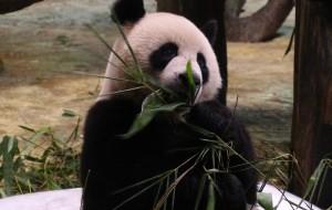 【广州长隆旅游度假区图片】暴走广州长隆动物世界----去看逗比请来的猴子