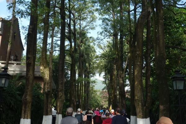 走进大门,高大的棕榈和榕树屹立在道路的两旁,呈现出一幅幽雅而庄重