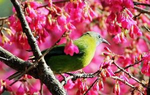【福州图片】福州国家森林公园吸食花蜜的鸟儿