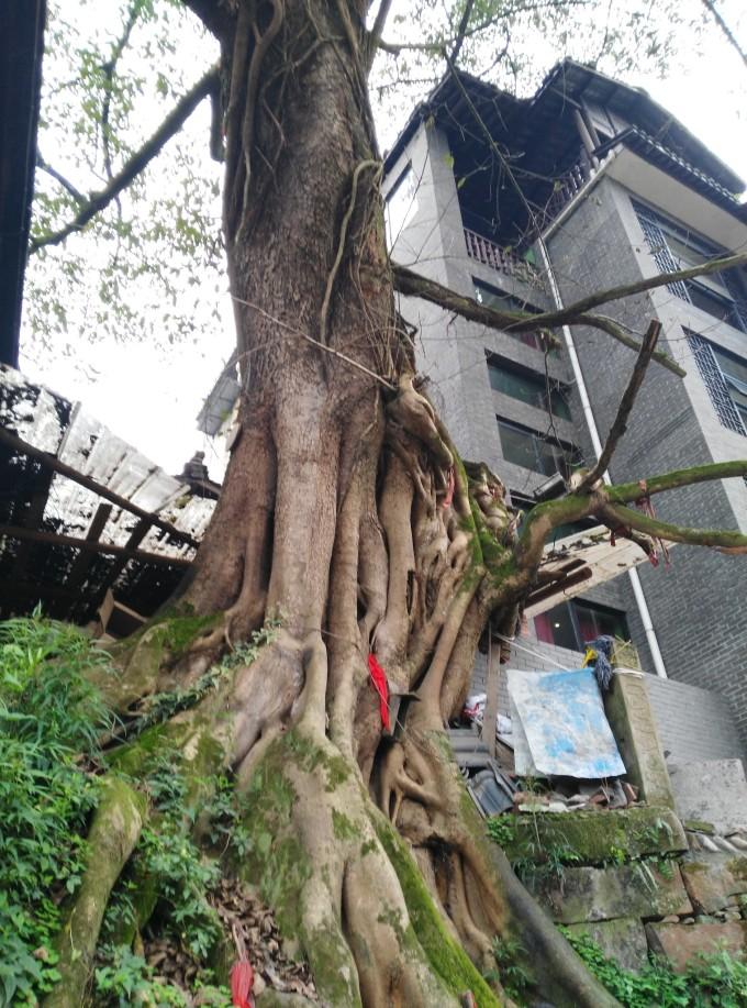 河心岛打造得不好,破烂的房子搭上塑料编织布,大煞风景.