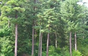 【伊春图片】五营国家森林公园 ---- 伊春避暑休闲3