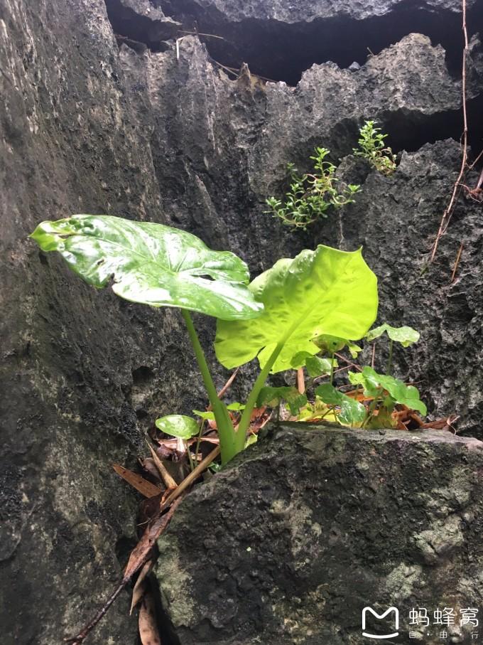 石缝里藏不住春天. 11. 春天的色彩. 12. 香蕉树的春天.