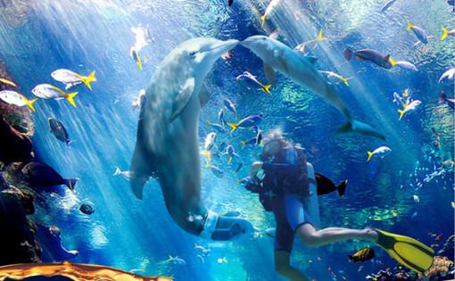 壁纸 海底 海底世界 海洋馆 水族馆 桌面 510_315