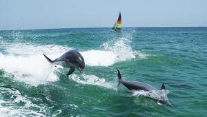 我们该不该去水族馆看海豚?