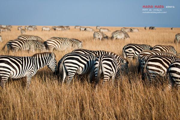 肯尼亚,圆一个动物世界的梦