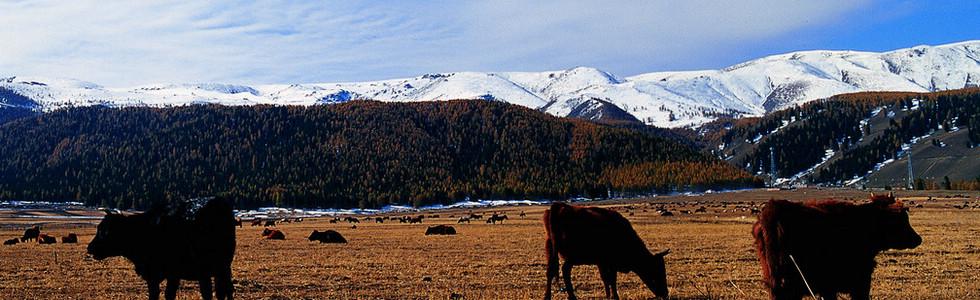 内蒙古高原西部,与甘肃省相邻、北与蒙古国接壤,渺无边际的大漠戈壁深处,有一片神秘的充满传奇色彩的土地额济纳。 额济纳每年只有一次旅行,只因那里仅仅存在十天的绝美绚丽,下次的邂逅又需要整整一年。来得太早,额济纳胡杨没有千姿百色的绚丽颜色,到得太晚了又会被高原的秋霜打掉胡杨树的叶子。一年一度的额济纳在十月等待你! 上.