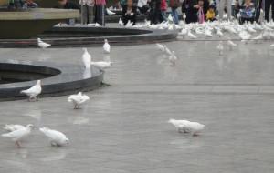 【塘沽图片】2011中秋塘沽一日游记