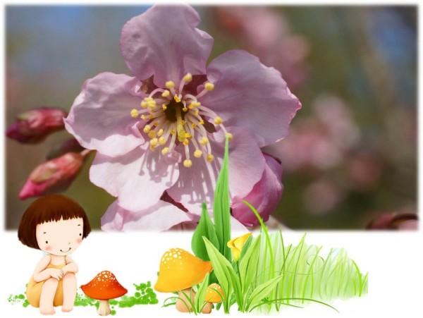 超级简单水粉画樱花