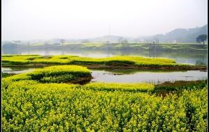 【新安江图片】春暖花开时、用镜头记录春天最美瞬间