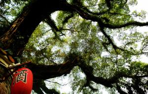 【贺州图片】幽幽小径,满墙春意——黄姚古镇