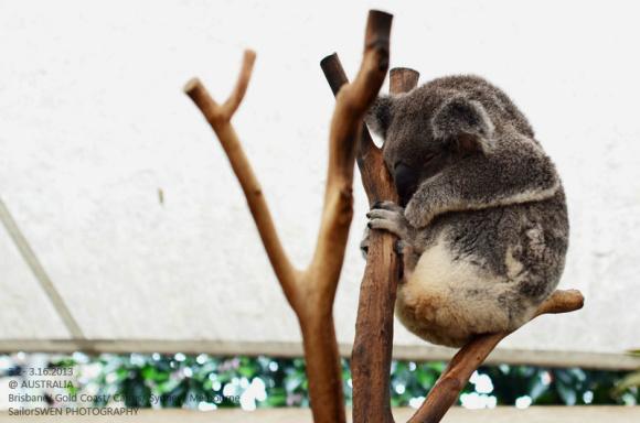 悉尼野生动物园: 1. 悉尼野生动物园邻近悉尼水族馆,这里有着超过1公里的玻璃封闭步道,穿越三个楼面,覆盖面积达7000平方米,是世界上最大的室内野生动物园; 2. 园内共分为九个不同的展馆—彩蝶飞舞、澳洲宝贝、袋鼠悬崖、热带雨林、爬行异族、无脊天下、午夜密踪、峡谷飞行、骄阳似火。涵盖了大约一百三十种,总数达六千多的澳洲本土野生动物; 3.
