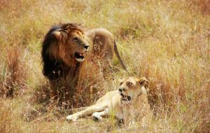 【非洲图片】神秘而狂野的非洲大陆缩影—肯尼亚