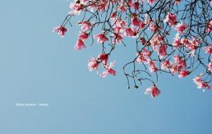 【江油图片】最忆那一季的花事