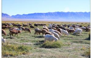 【巴里坤图片】单车两人,行两万里,横穿五省,新疆好地方之旅(六) 行走老G310国道