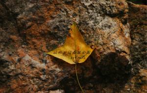 """【从化图片】""""枫""""轻轻地来了---从化石门森林公园"""
