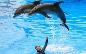蓬莱娱乐-蓬莱海洋极地世界