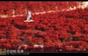 【盘锦图片】上帝的调色板——盘锦红海滩【可能是迄今为止最全面最准确的红海滩攻略】