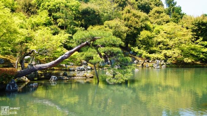 路过一个神社,好像叫宫野神社来着……@下mamo酱.
