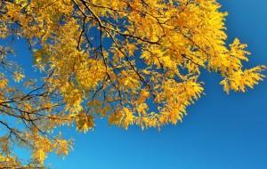 【多伦多图片】秋天的童话