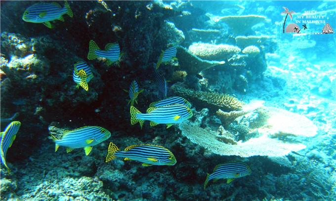 壁纸 海底 海底世界 海洋馆 水族馆 桌面 680_407