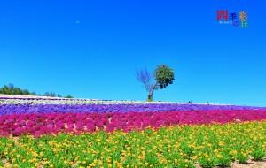 【富良野图片】北海道,东京,镰仓,13天夏日赏花只给最完备最实用的攻略