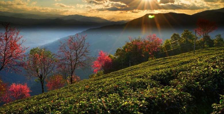 如果评选中国最适合旅游的省份,云南是一定会上榜的。做为全国著名的旅游圣地,云南的景点之多,景点之美,景点之独特耐游实属罕见。不过全国人民可能对丽江、大理、西双版纳,玉龙雪山等地比较熟悉,殊不知在云南还有一个地方也是云...