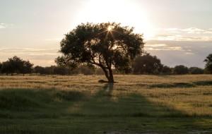 【沙湾图片】7月向北出发,寻找草原··········