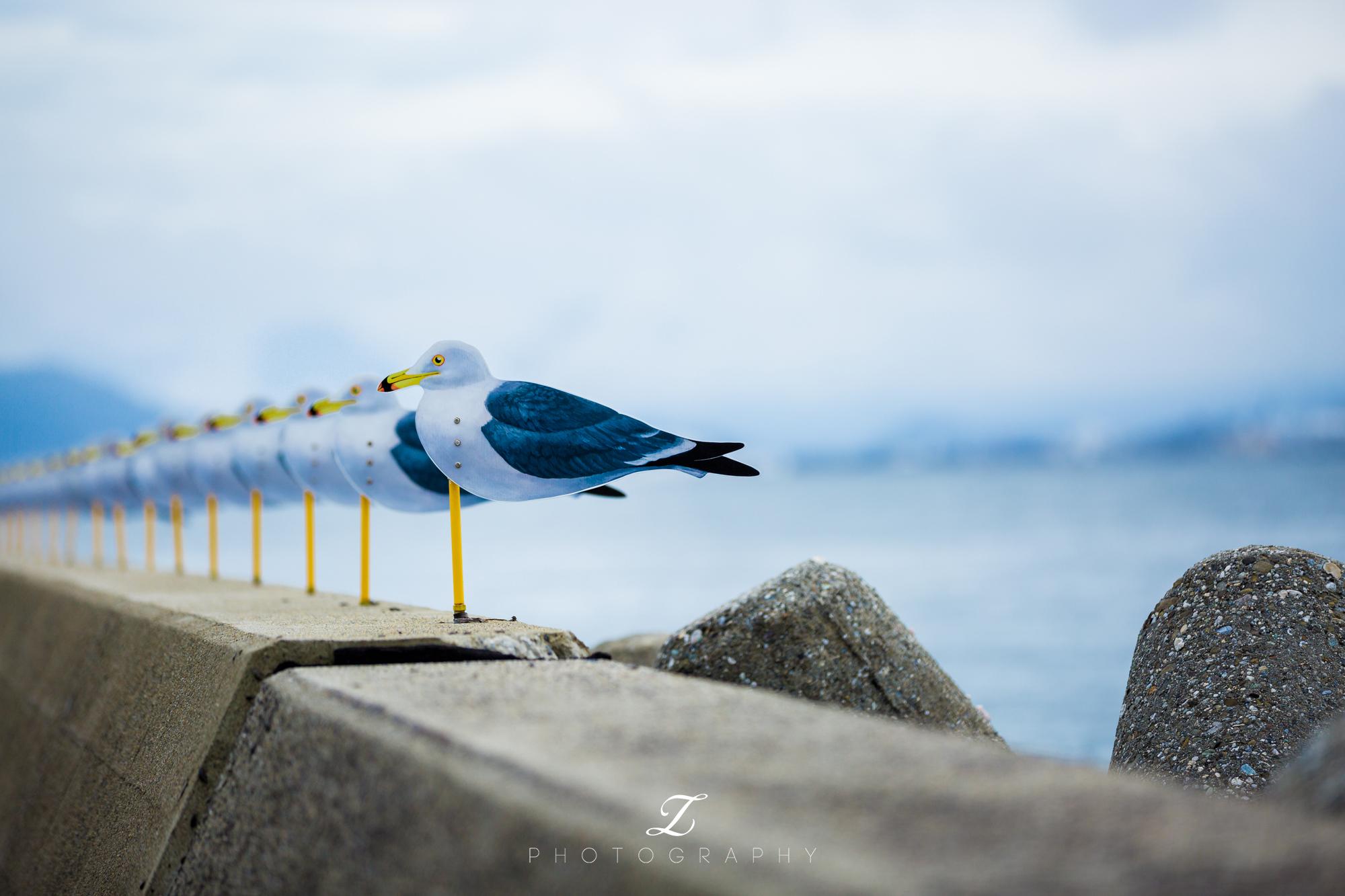 女木岛旅游图片