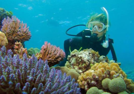 神奇的海底世界,邂逅各种呆萌的海底动物和美丽的
