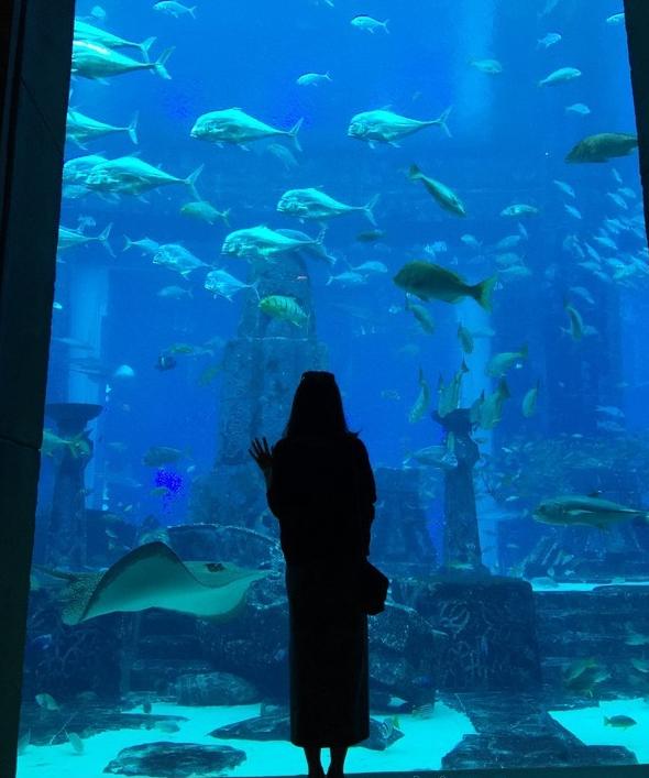 消失的亚特兰蒂斯文明为主题的海底水族馆,据说有五六万条海洋鱼类