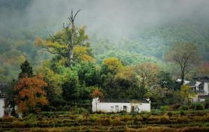【塔川图片】塔川雨中赏秋