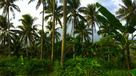 驱车前往魔法花园,沿途欣赏苏梅岛