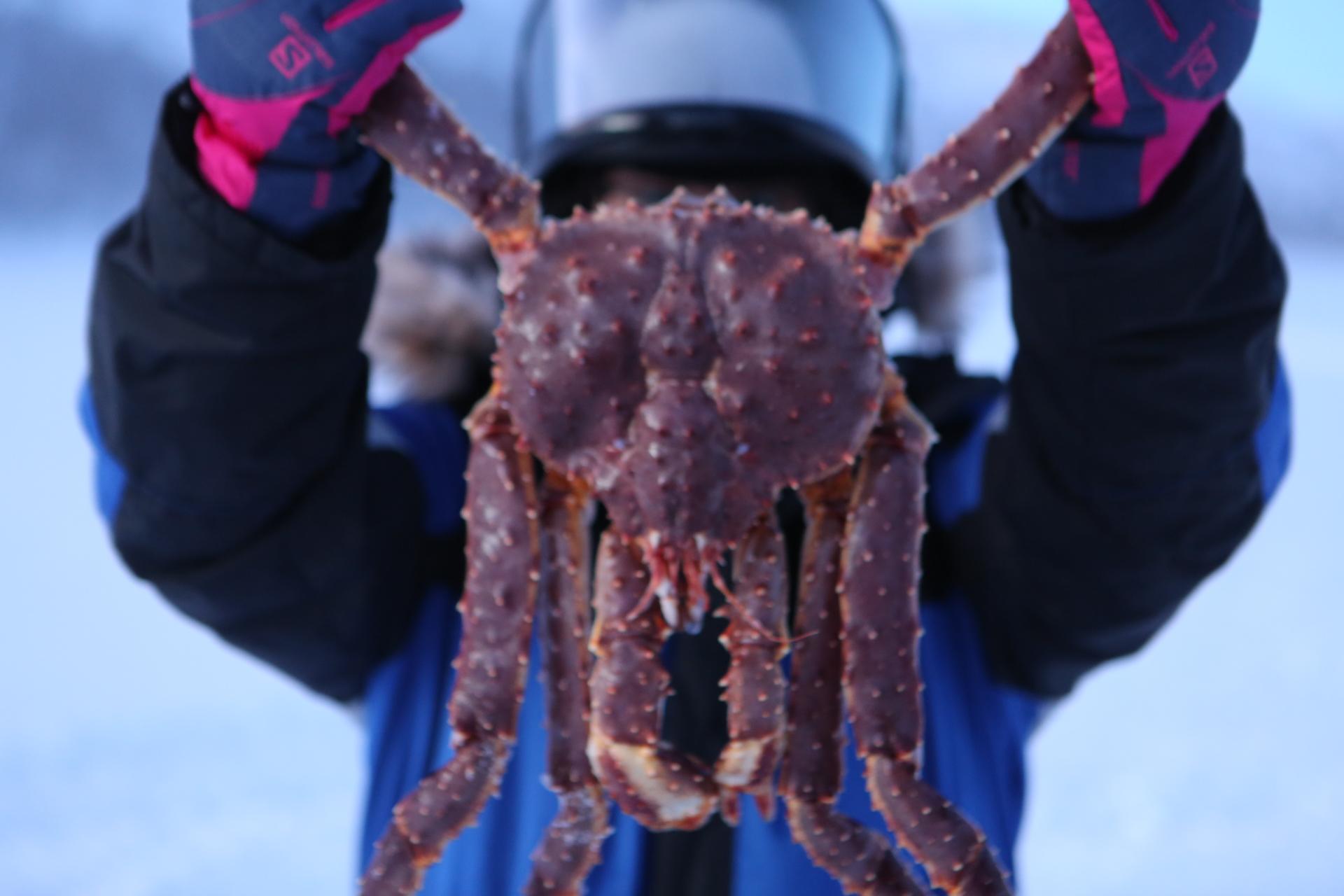 挪威帝王蟹捕捞:品尝巴比伦深海下1000米的美味_游记