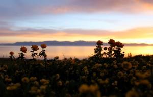 【伊犁图片】美丽新疆,花海伊犁——赛里木湖、果子沟、霍尔果斯口岸