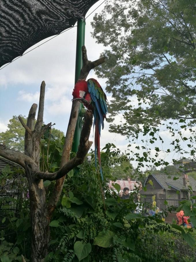 比国内普通的动物园要开放,刺激的多,而且韩国动物园非常注重互动
