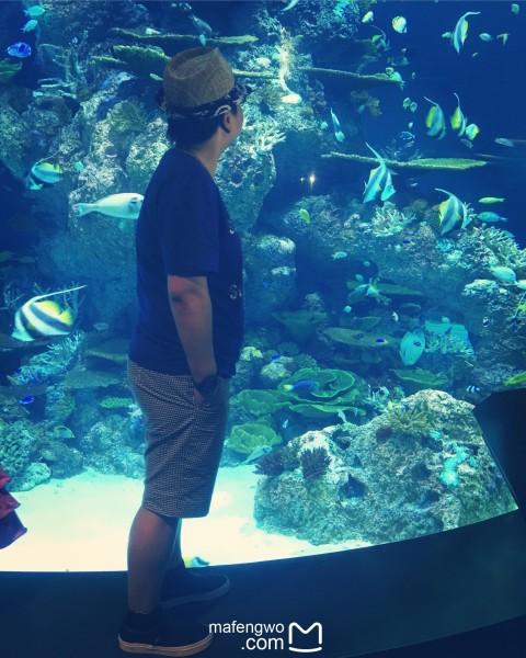 壁纸 海底 海底世界 海洋馆 水族馆 480_600 竖版 竖屏 手机