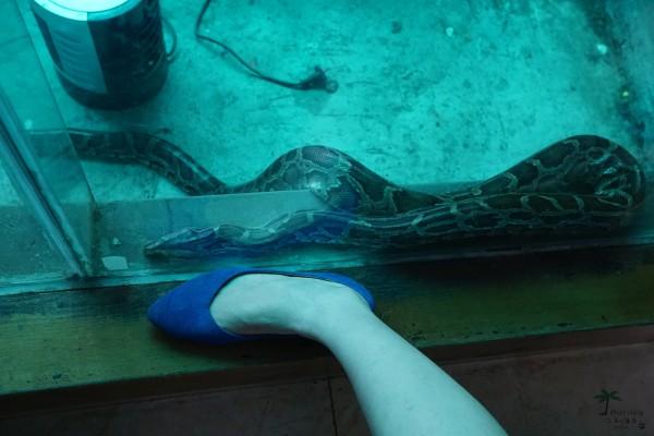 蟒蛇馆,里面有卖蛇油,蛇皮钱包的,与蟒蛇照相的,当然还有关着的大